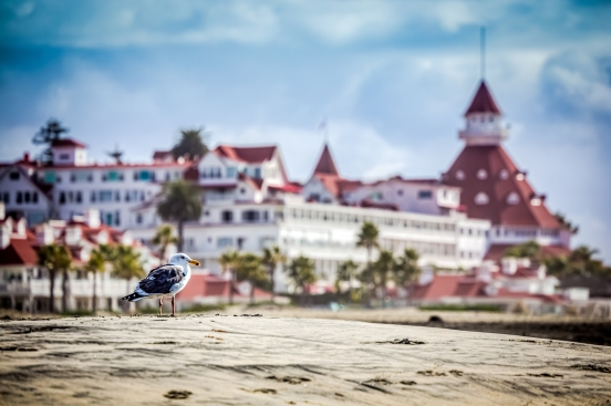 A seagull on the beach in Coronado, CA near the Hotel Del Coronado.