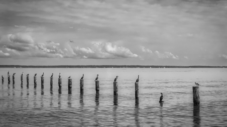 Birds sitting on posts near the shores of Colonial Beach, Virginia.